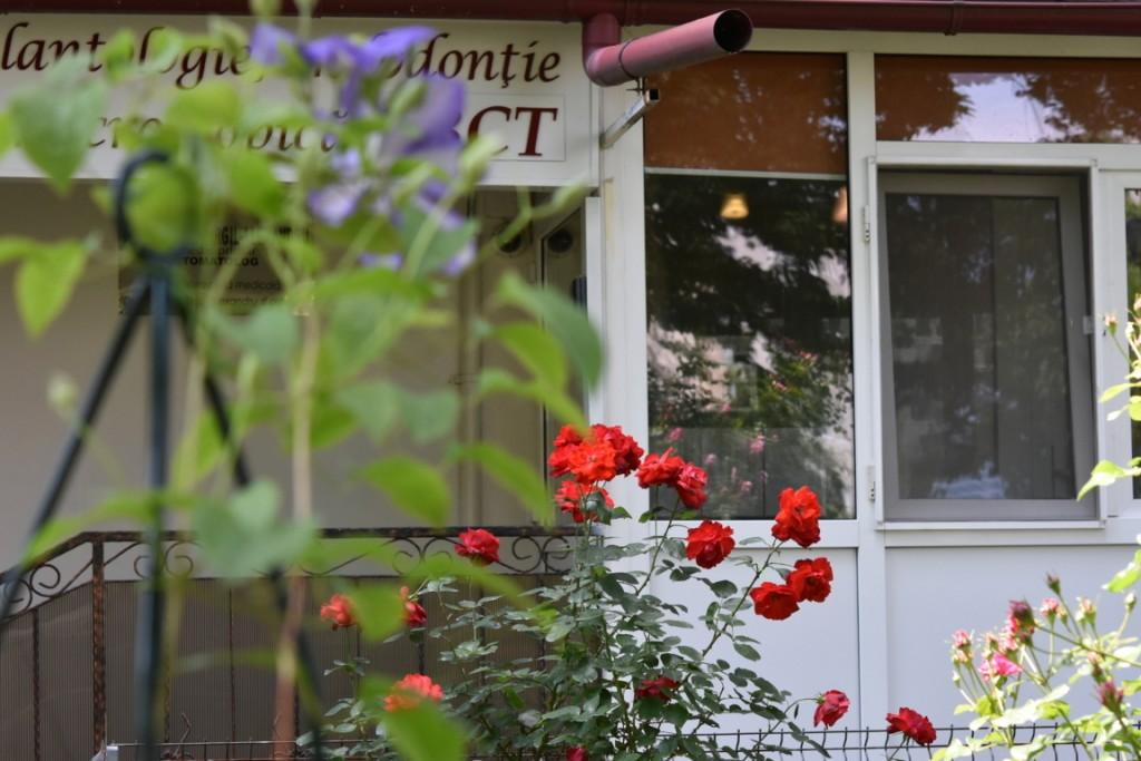 Trandafiri Gianina detalii 164 (FILEminimizer)