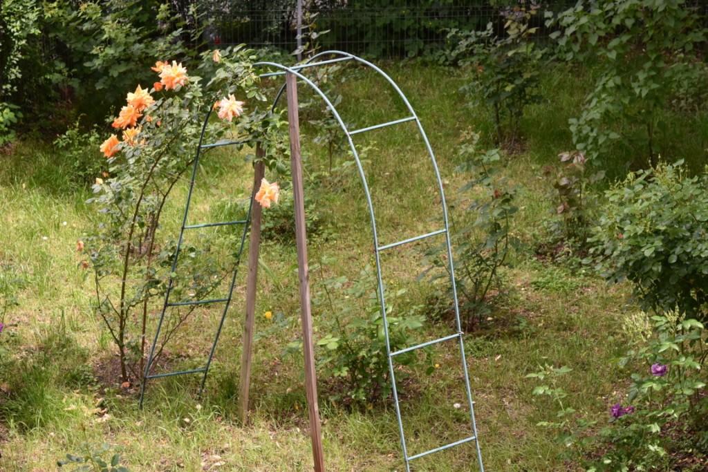 Trandafiri de sambata (1) (FILEminimizer)