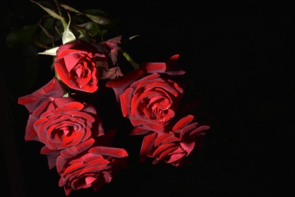 Trandafiri fulgerati (36) (FILEminimizer)