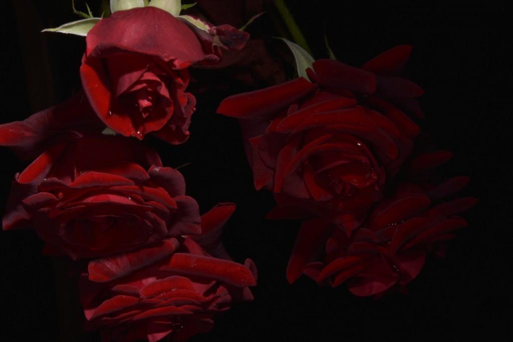 Trandafiri fulgerati (39) (FILEminimizer)