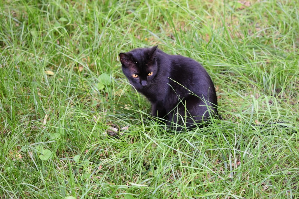 Trandafiri pisici si vrabii moarte (1) (FILEminimizer)