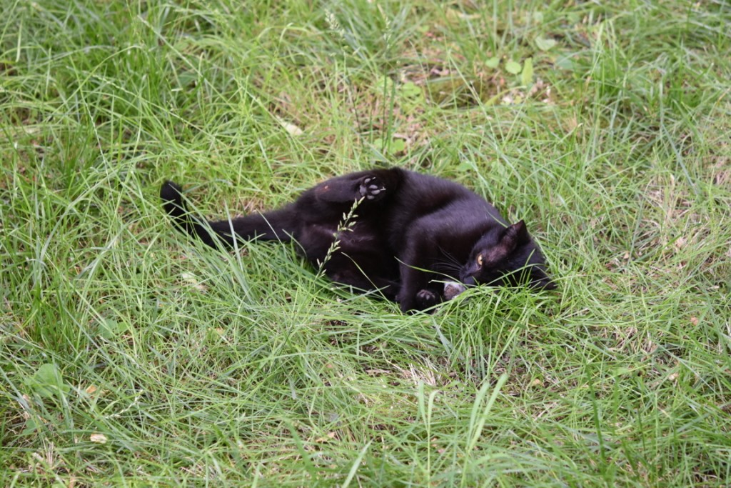 Trandafiri pisici si vrabii moarte (11) (FILEminimizer)