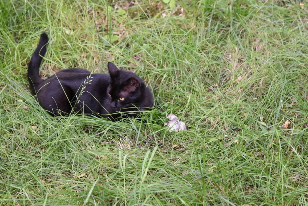Trandafiri pisici si vrabii moarte (14) (FILEminimizer)