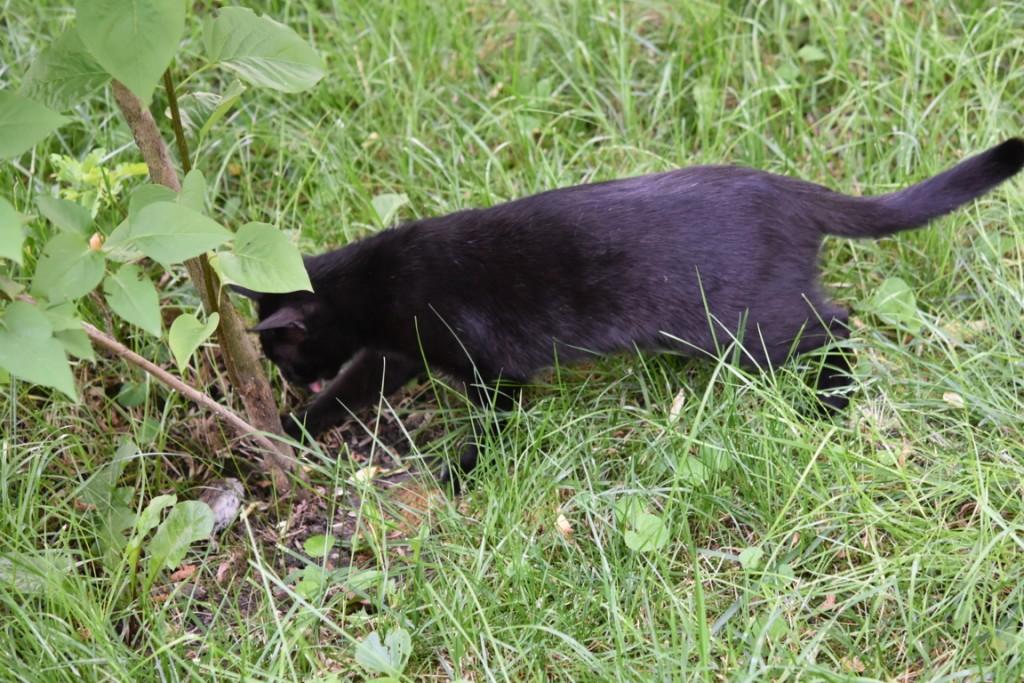 Trandafiri pisici si vrabii moarte (15) (FILEminimizer)