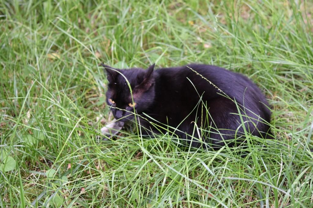 Trandafiri pisici si vrabii moarte (2) (FILEminimizer)
