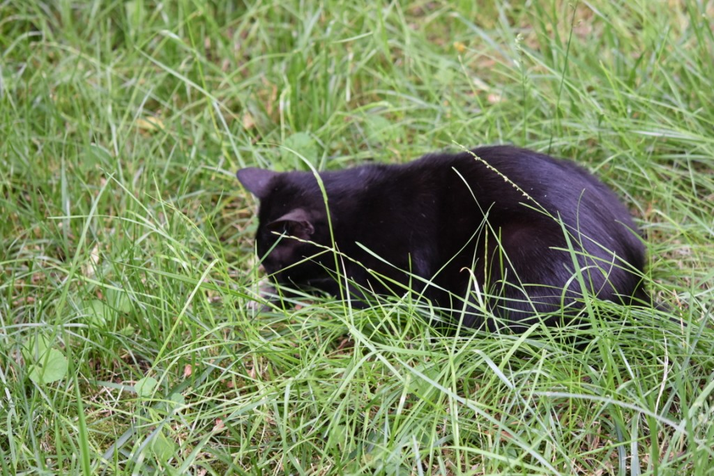Trandafiri pisici si vrabii moarte (3) (FILEminimizer)