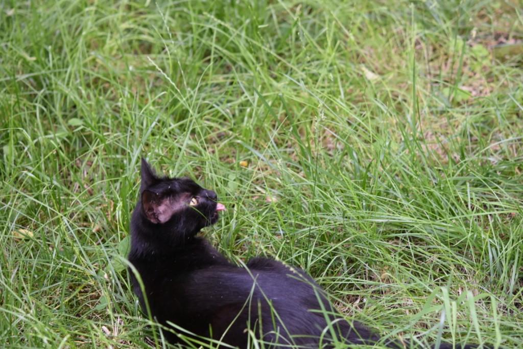Trandafiri pisici si vrabii moarte (4) (FILEminimizer)