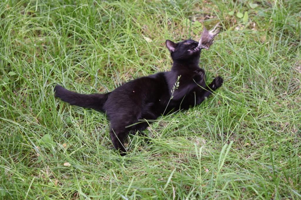 Trandafiri pisici si vrabii moarte (8) (FILEminimizer)