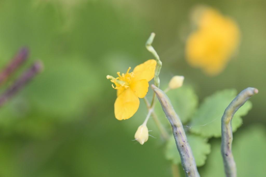 Trandafiri si musafiri (102) (FILEminimizer)