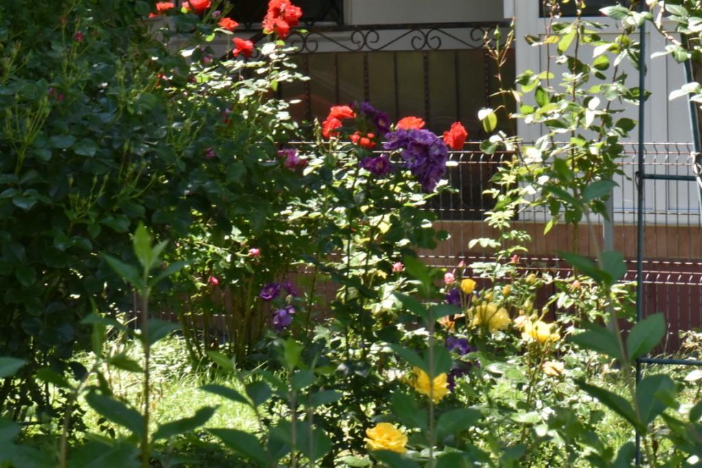Trandafiri si musafiri (104) (FILEminimizer)