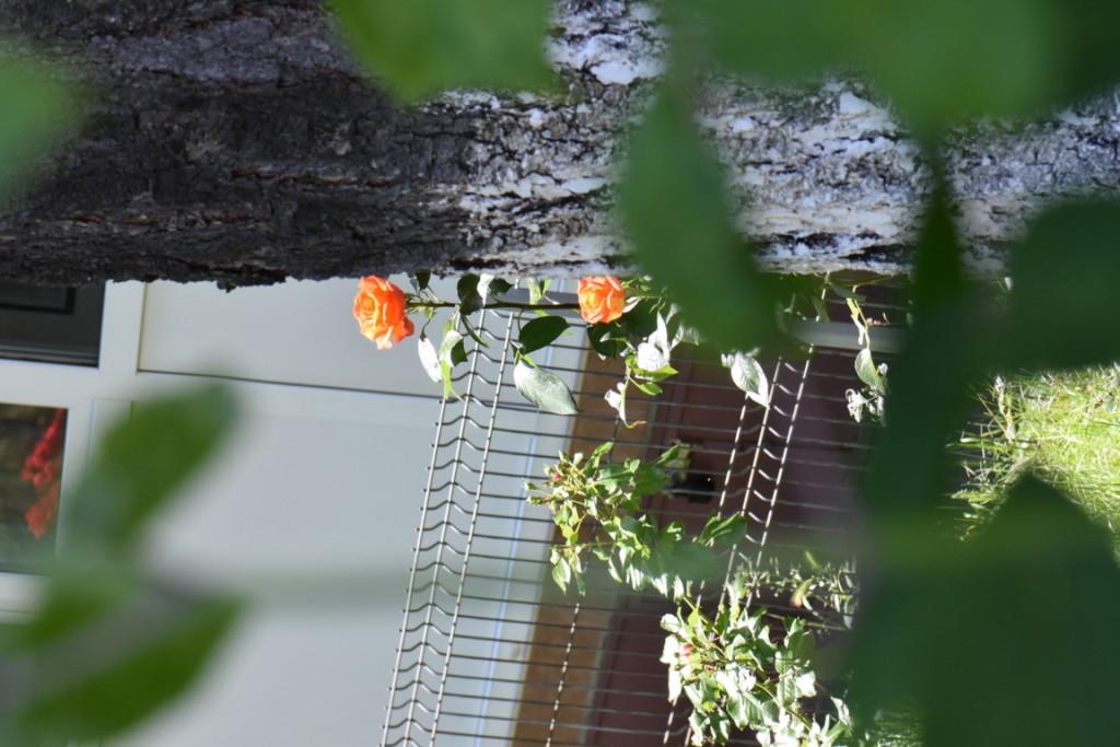 Trandafiri si musafiri (113) (FILEminimizer)