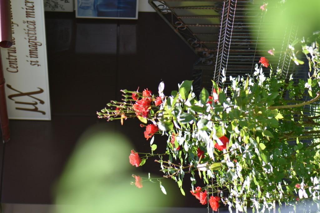 Trandafiri si musafiri (114) (FILEminimizer)