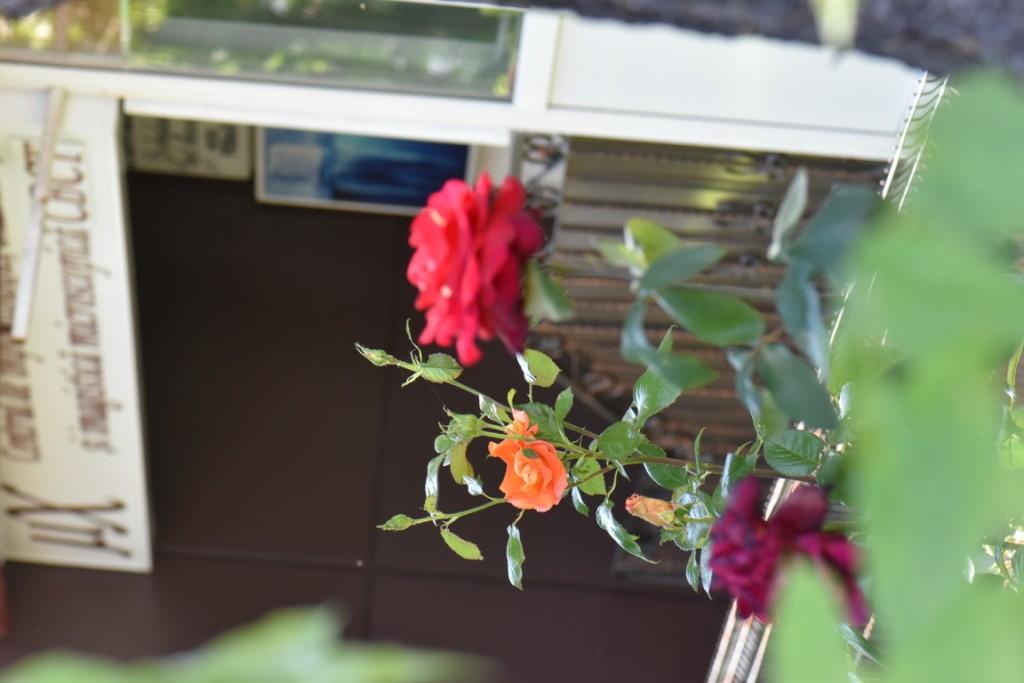 Trandafiri si musafiri (116) (FILEminimizer)