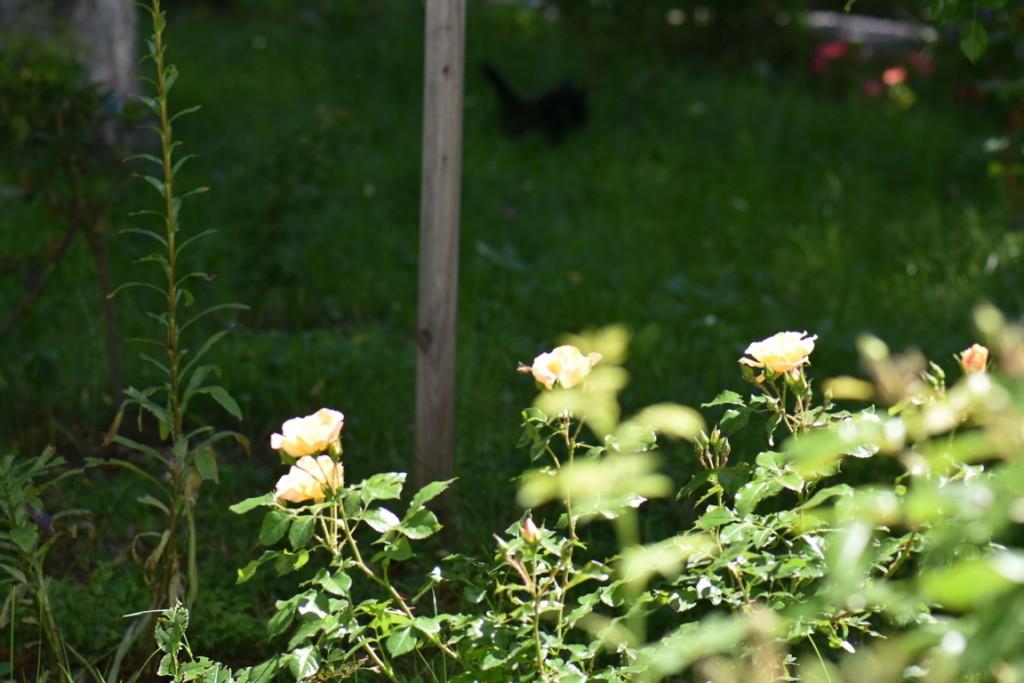 Trandafiri si musafiri (119) (FILEminimizer)