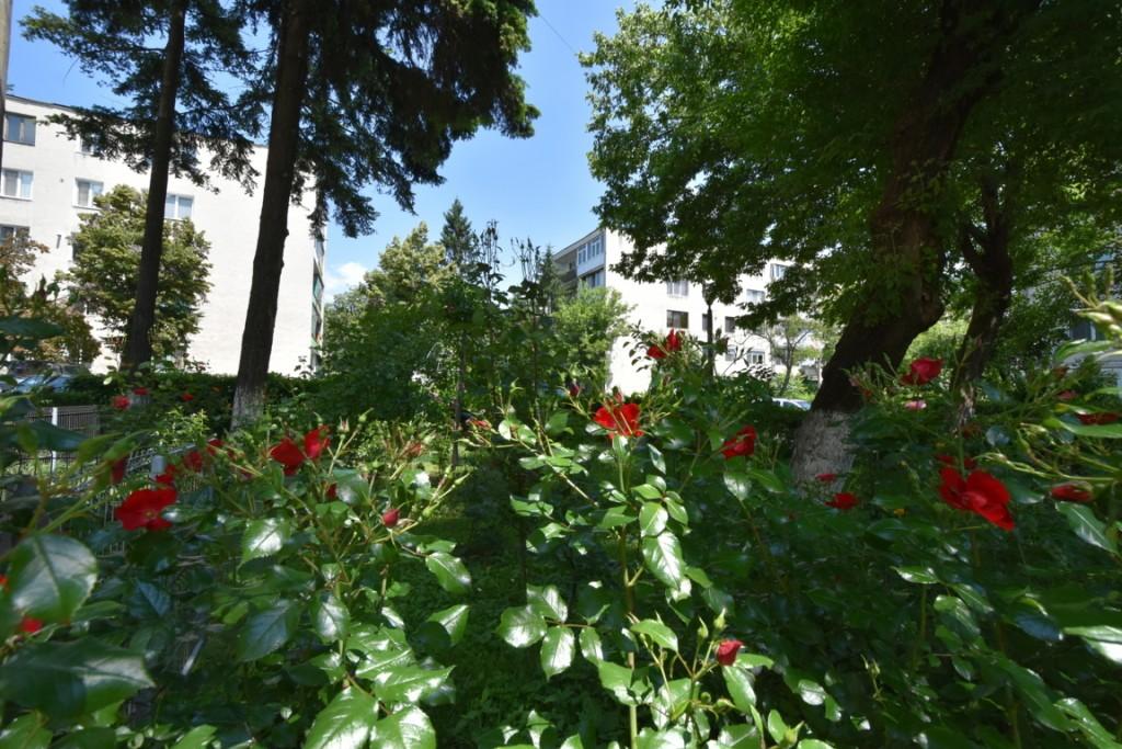 Trandafiri si musafiri (4) (FILEminimizer)