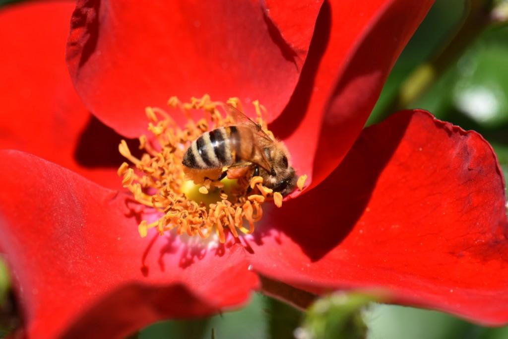 Trandafiri si musafiri (41) (FILEminimizer)