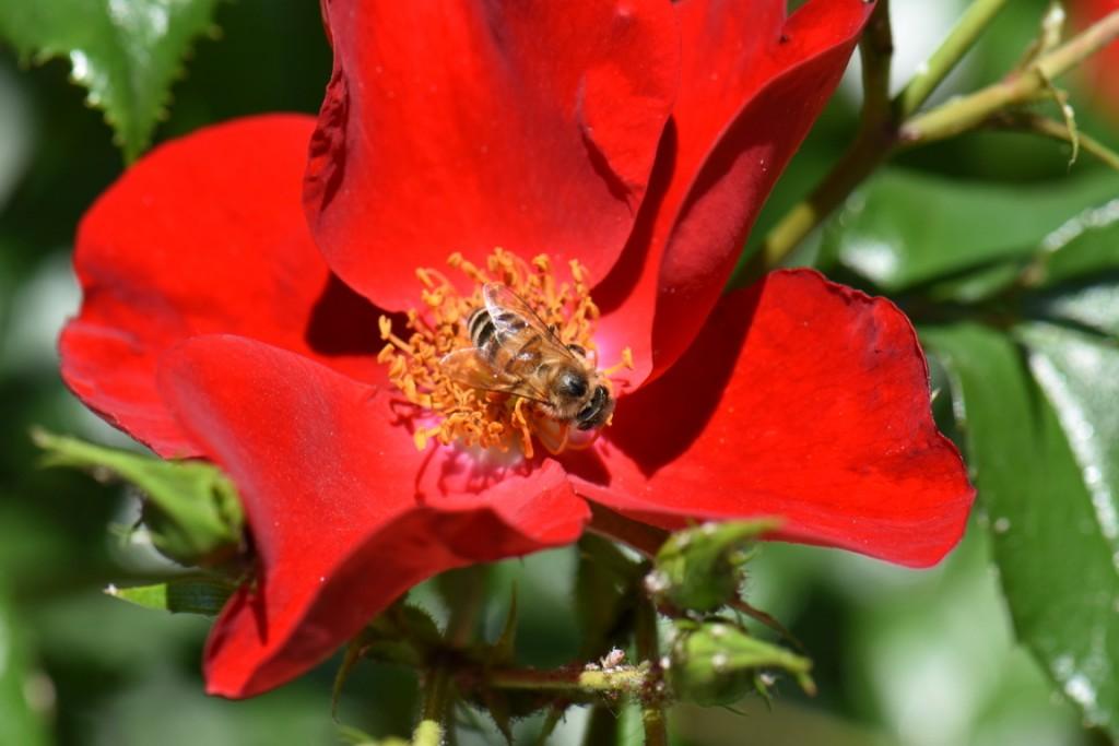 Trandafiri si musafiri (44) (FILEminimizer)