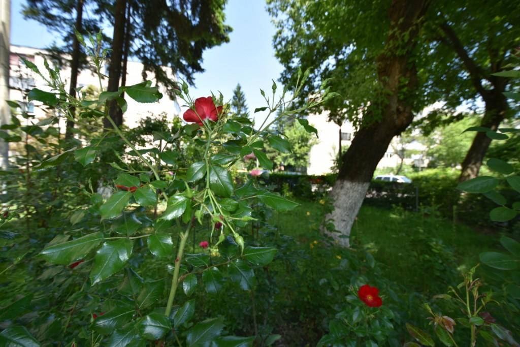 Trandafiri si musafiri (5) (FILEminimizer)