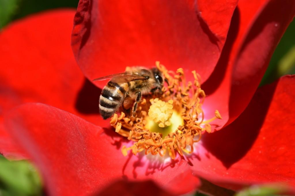 Trandafiri si musafiri (59) (FILEminimizer)