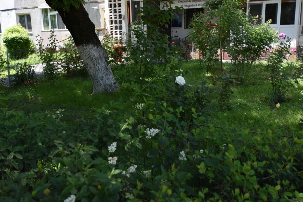 Trandafiri si musafiri (6) (FILEminimizer)