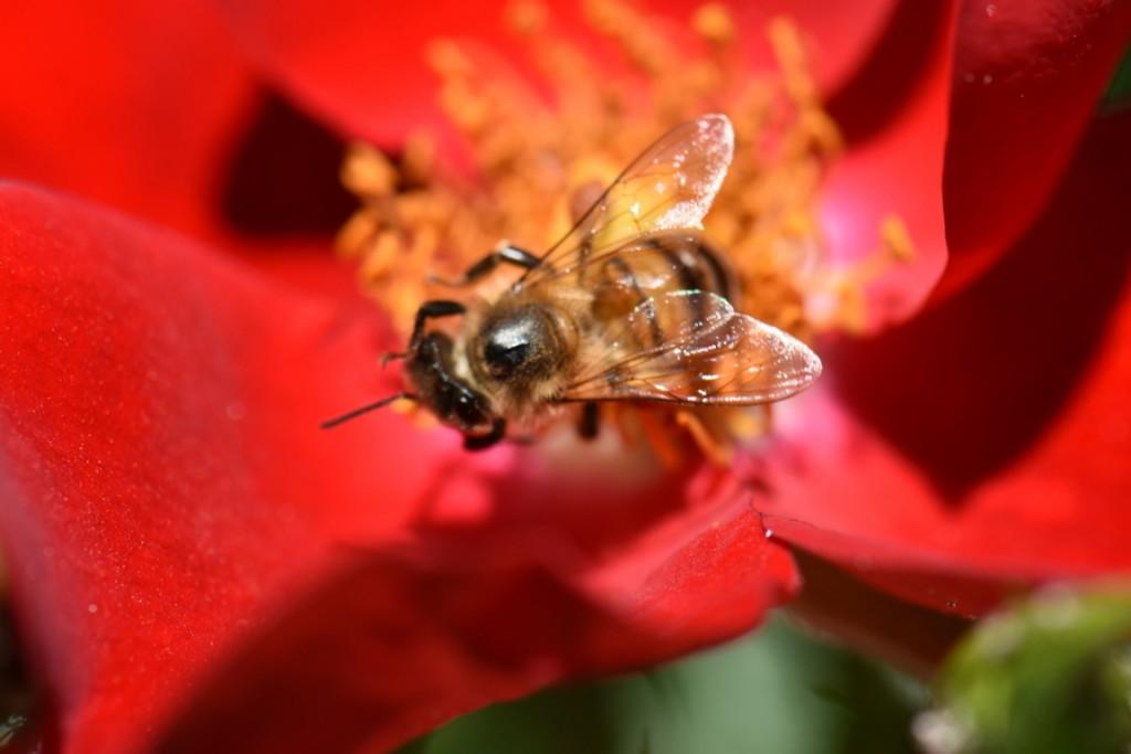 Trandafiri si musafiri (61) (FILEminimizer)