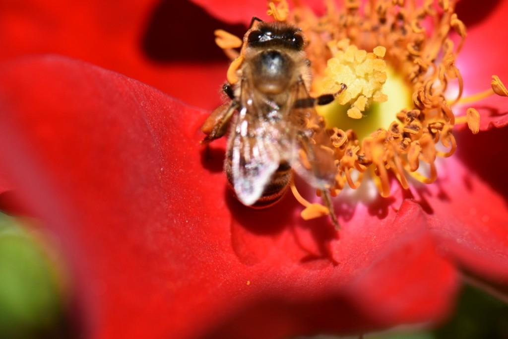 Trandafiri si musafiri (67) (FILEminimizer)