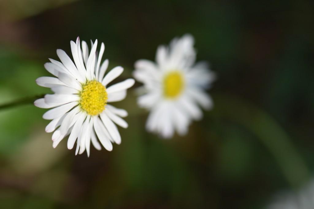 Trandafiri si musafiri (86) (FILEminimizer)
