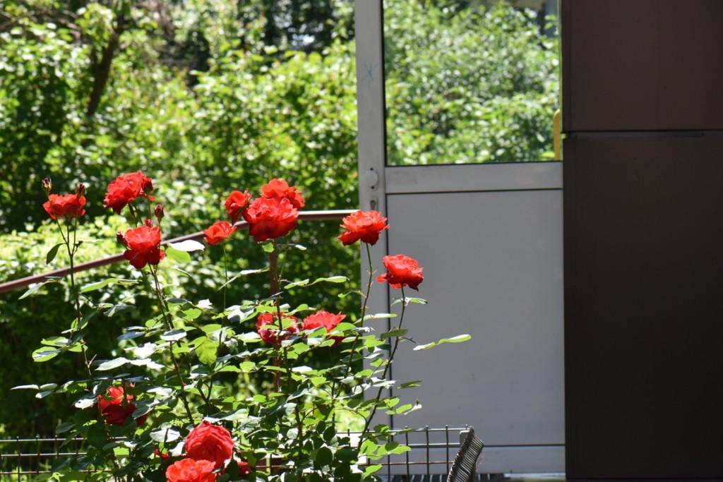 Trandafiri si musafiri (88) (FILEminimizer)